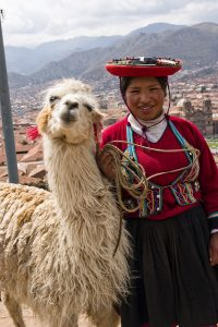 Alpaca in Peru photo by Teresa Stanton