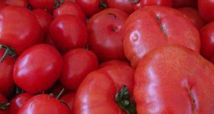Hungarian Tomatoes